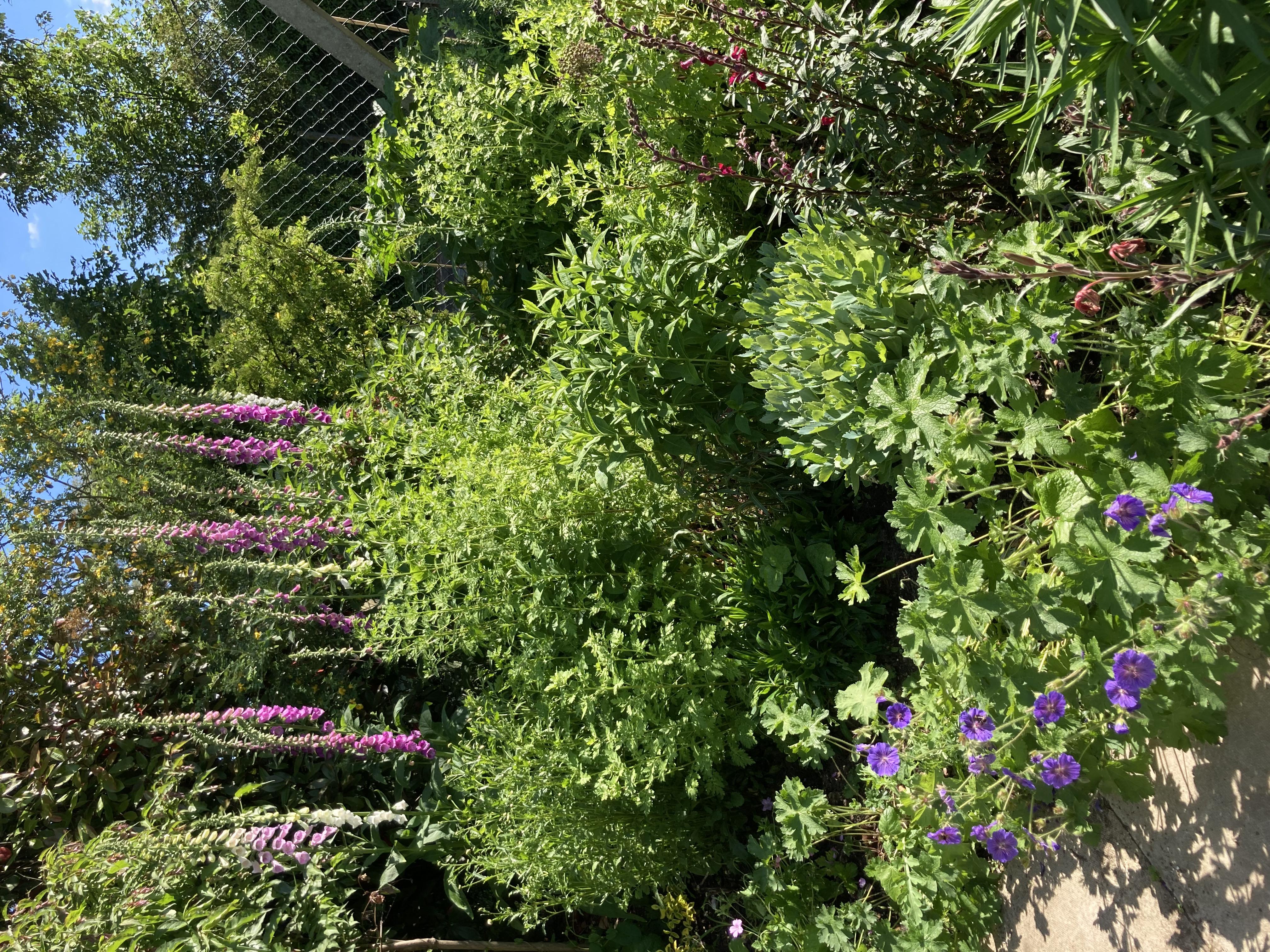 Our Bee friendly garden