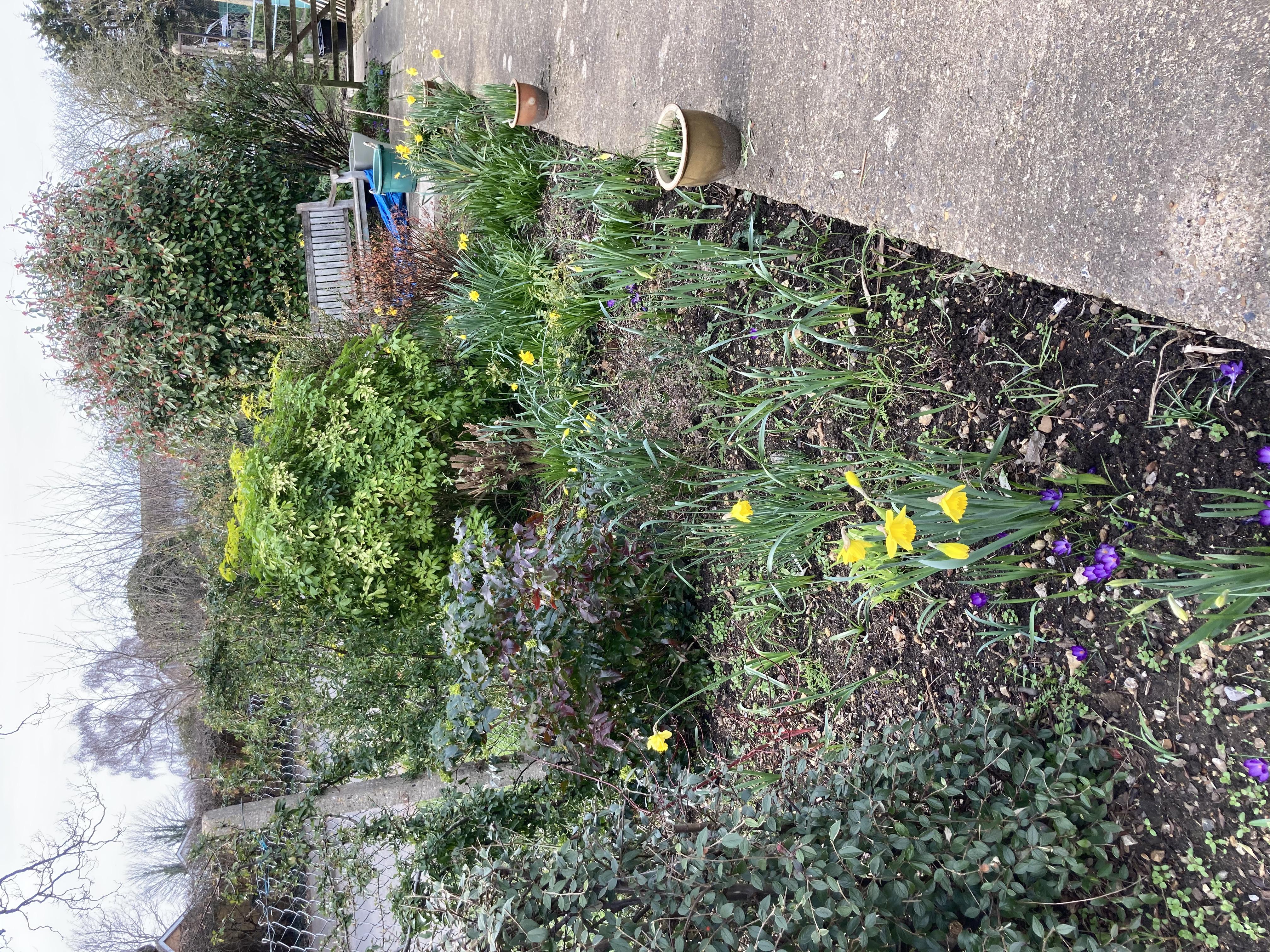 Our Garden Spring 2021